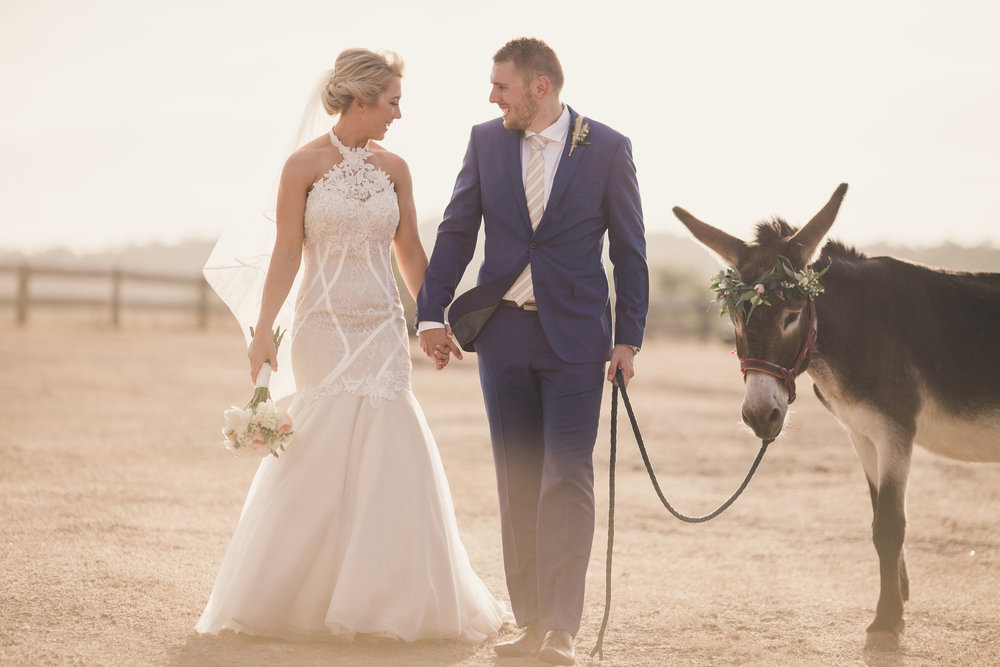 Bride and Groom with donkey wearing flower crown at Spicers Hiddenvale