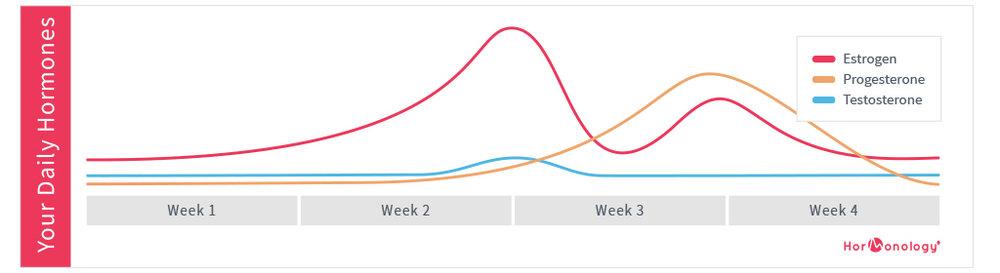Female-Hormone-Cycle-Chart-Hormonology.jpg