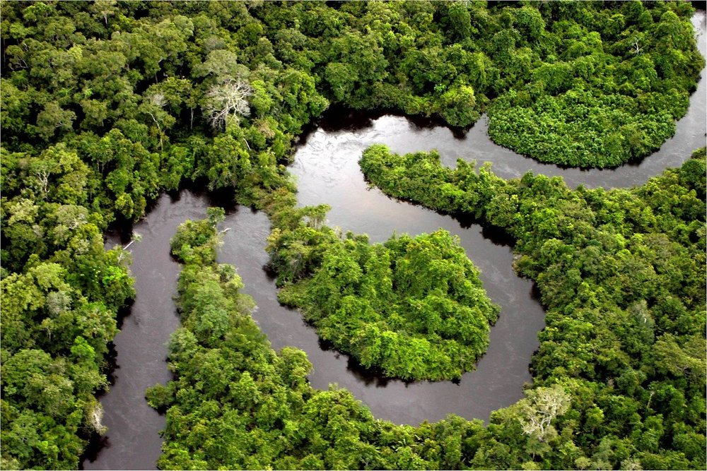 The Amazon alone is estimated to store 150-200 Gigatons of carbon in soils and living biomass (approximately 5 times global yearly CO2 emissions), and act as a sink for 420 - 650 Megatons of carbon every year (approximately 1.5 percent global yearly CO2 emissions). On top of this, it is home to millions of insect species and more than 40,000 plant species, providing mindboggling genetic diversity to bio-prospectors (source).