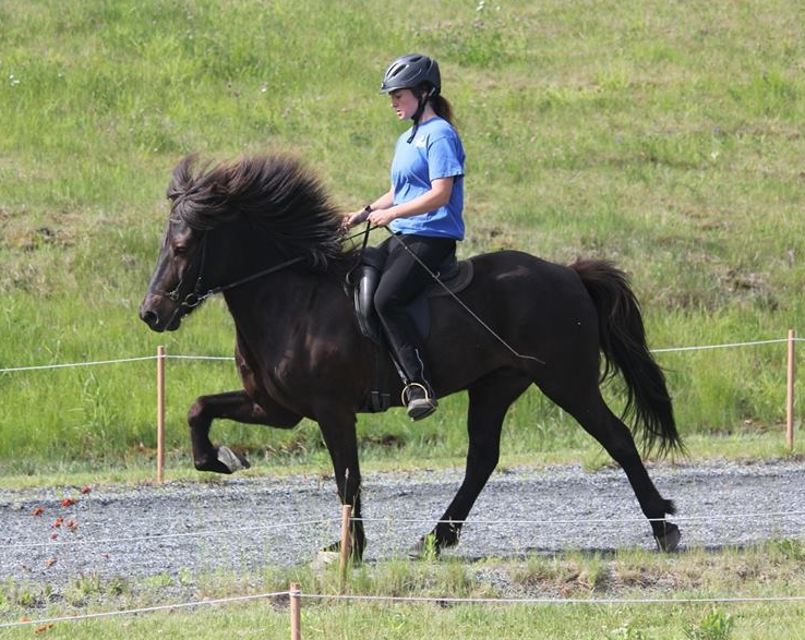 Hjörturs first US offspring Vaskur from Four Winds Farm at four years old