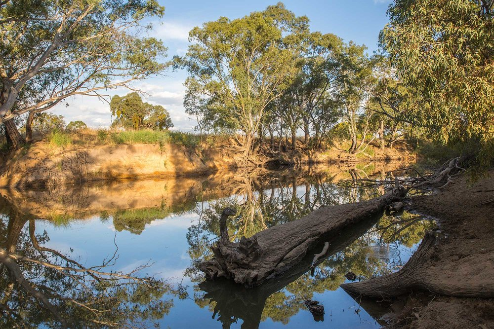 July - August is Wanyarra (Water) &Gurri (Kangaroo) Time -