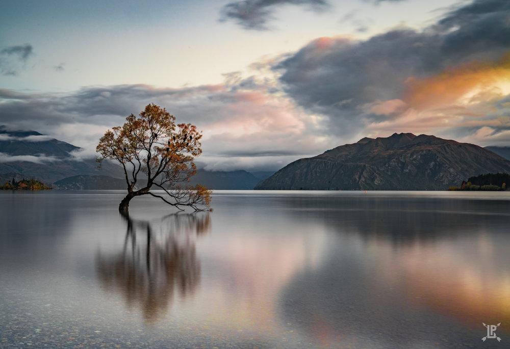 The world famous Wanaka Tree   Sony A7RIII,   24-70mm GM  | f/22, 15 sec, ISO 100