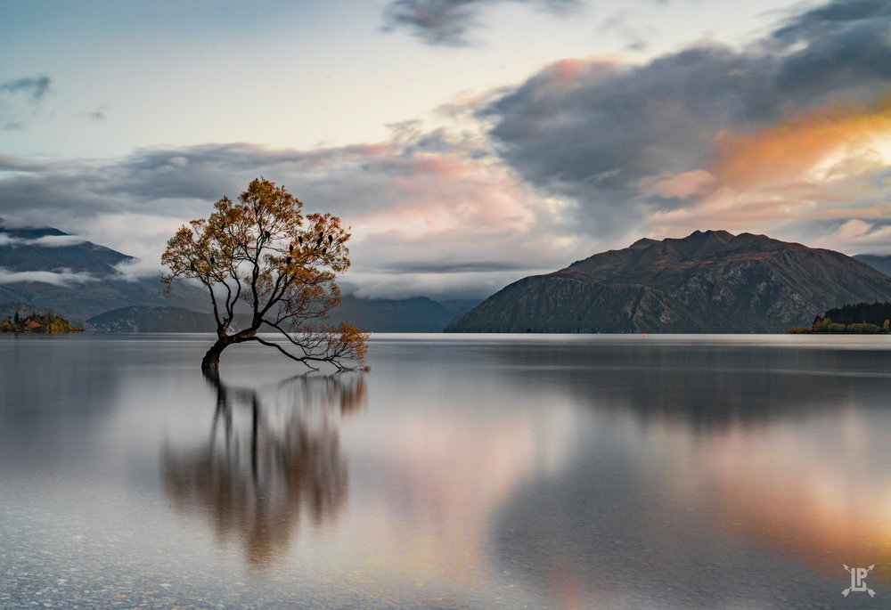 Sony A7RIII,   24-70mm GM  | f/22, 15 sec, ISO 100  The Wanaka Tree at sunrise.  The changing leaves added a lot to the photo.