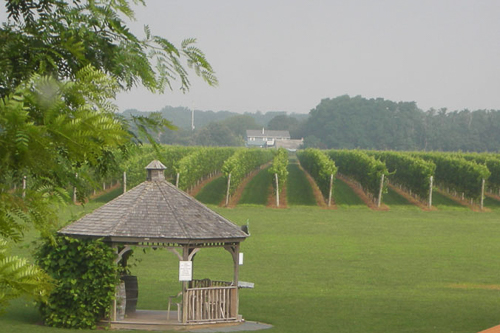 Osprey's Dominion Vineyard - 20% off all purchases (tastings not inc)