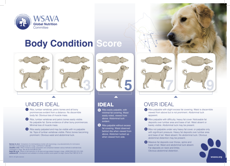 Dog Body Condition Score