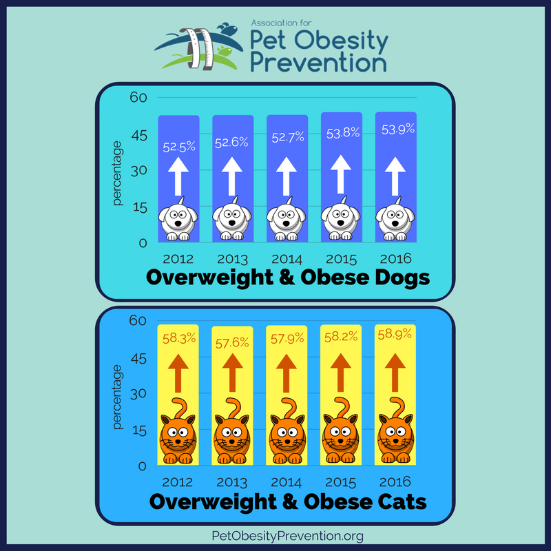 2012-2016 pet obesity.png