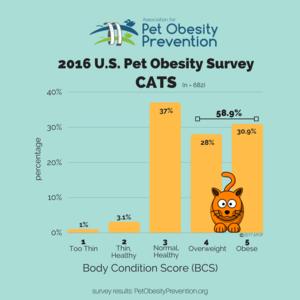 2016年美國貓BCS結果Infographic.png