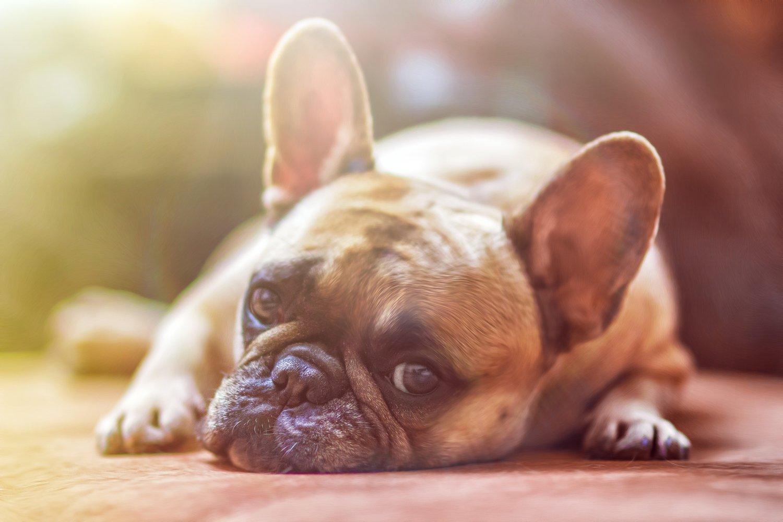 association for pet obesity prevention