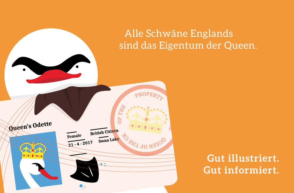 Mini Infografik über Schwan von Elisabeth Deim