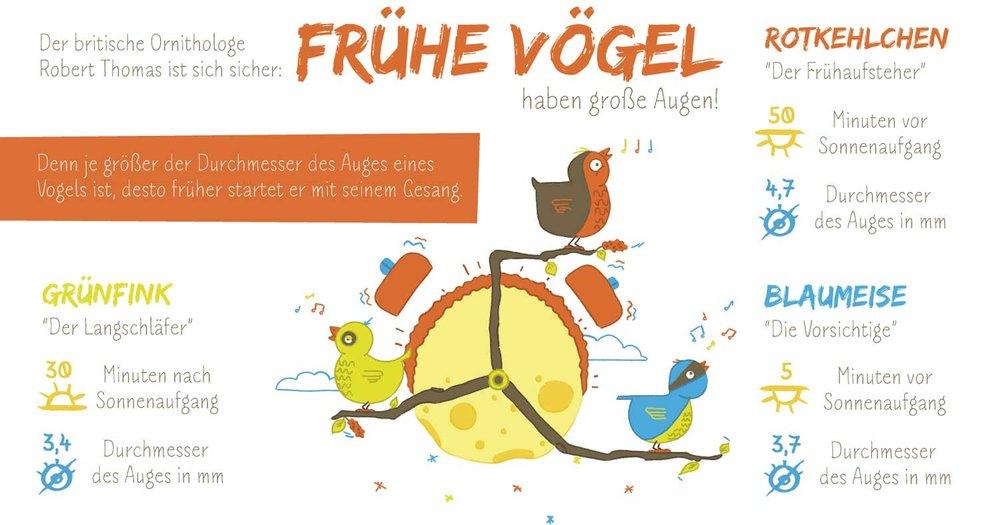 """Infografik """"Der frühe Vogel"""" von Elisabeth Deim"""