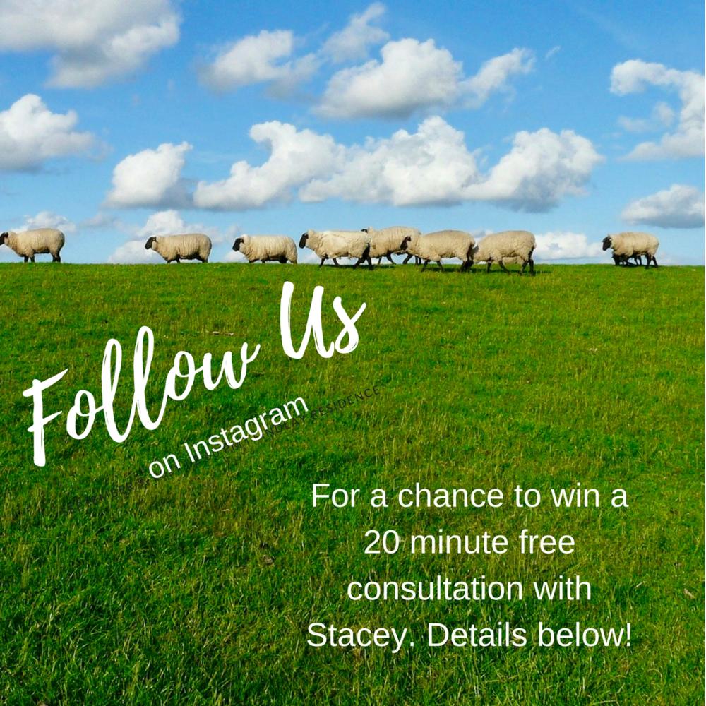 Follow us sheep.png