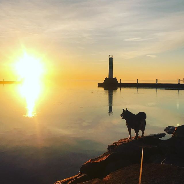 Great start to the day w the pup catching the city quiet for a moment at sunrise. I get a minute to think and breathe.... he runs around like a maniac and hates staying still for photos. #chicity #sunrise #dogsofchicago #risenrun