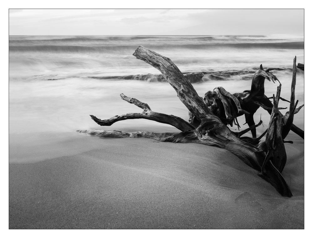 Maui Driftwood 2 Final BW.jpg