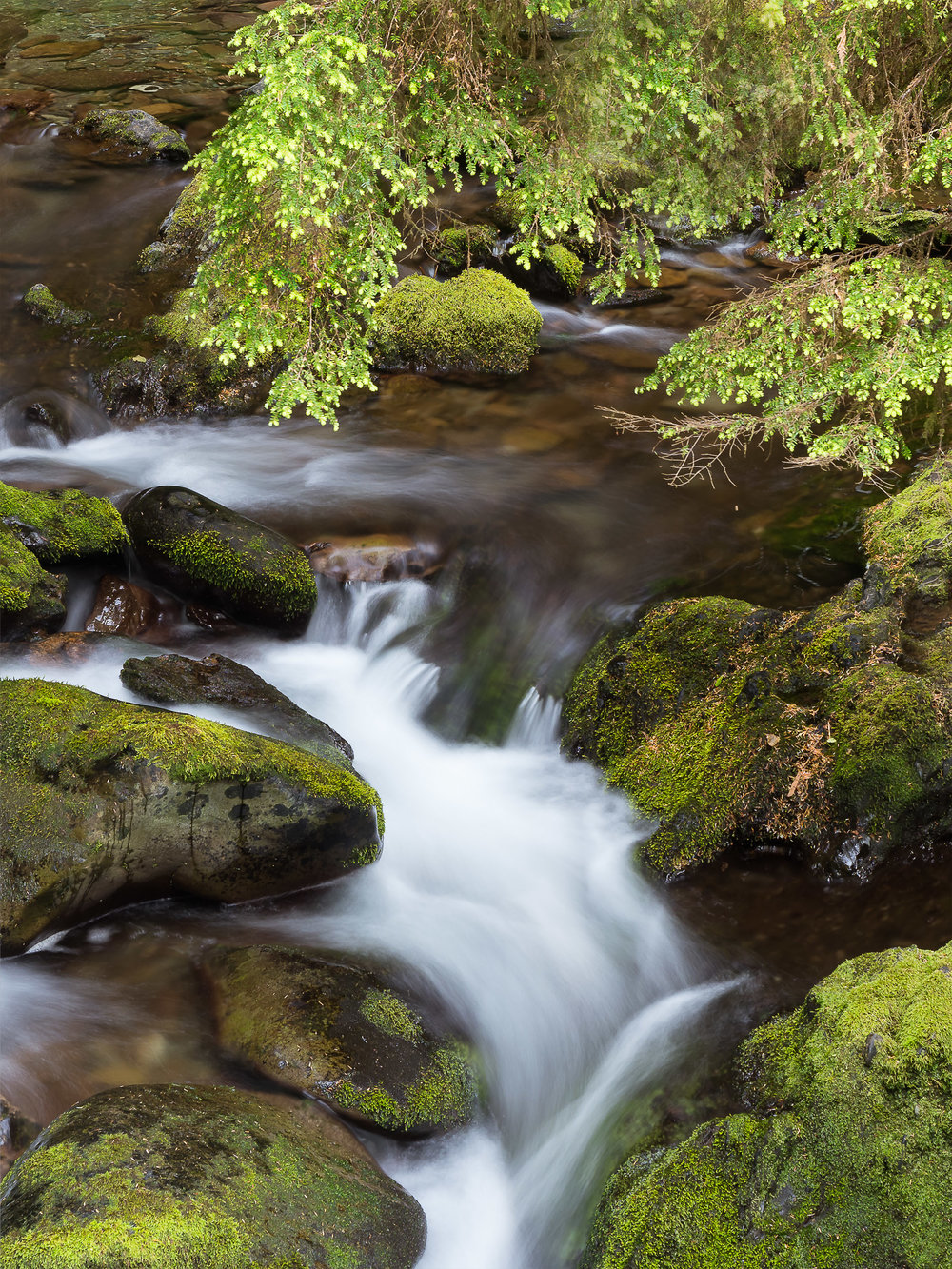 Perfect Stream - Olympic National Park ©John Guillaume   1/60 sec, f7.1, ISO 64 - Shot on a tripod
