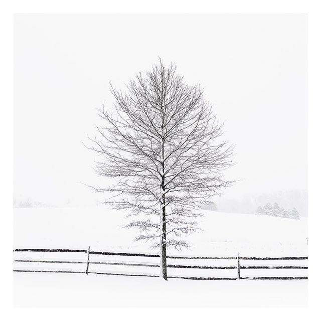 Happy Holidays! ☃️❄️🎄 . . . . . #bnw_demand#bnwmood #monochrome_lovers#monochromephotography #bmw_globe#blackandwhitephotography#blacknwhite_perfection #bnw_captures#bnw_city #minimal_perfection#unlimitedminimal #rsa_minimal#supermegamasterpics_bw#supermegamasterpics_minimal#mnm_gram #ig_minimalist#masterofwhiteness #minimallandscape#fineart_photobw #fineartphotography#landscape_captures#tree_perfection #tree_captures#tree_brilliance #sonyalphagallery #triptych