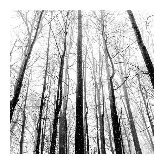 /ˈkänˌtrast/ . :-) - ;-) - :-0 #bnwmood #monochrome_lovers #monochromephotography #landscapephotography #blackandwhitephotography #blacknwhite_perfection #bnw_captures #bnw_city #minimal_perfection #unlimitedminimal #rsa_minimal #supermegamasterpics_bw #supermegamasterpics_minimal #ig_minimalist #masterofwhiteness #minimallandscape #fineart_photobw #fineartphotography #landscape_captures #tree_perfection #tree_captures #tree_brilliance #sonyalpha #waynepa #landscapepainting