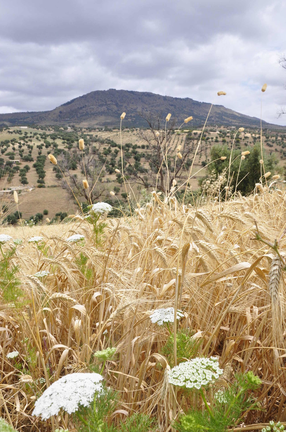 Countryside on the way from Dar7louyat to Jebel Zalagh