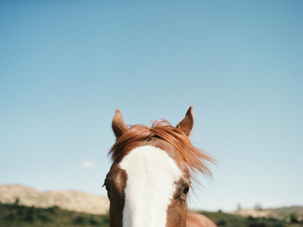 horsehair_print.jpg