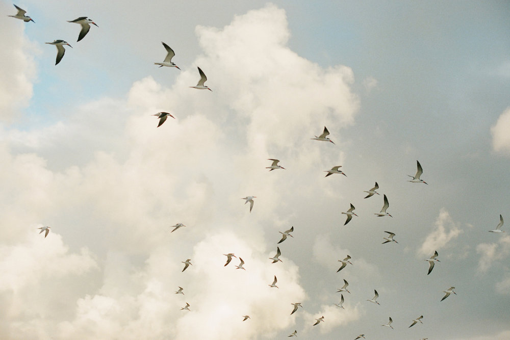 print_seagulls.jpg