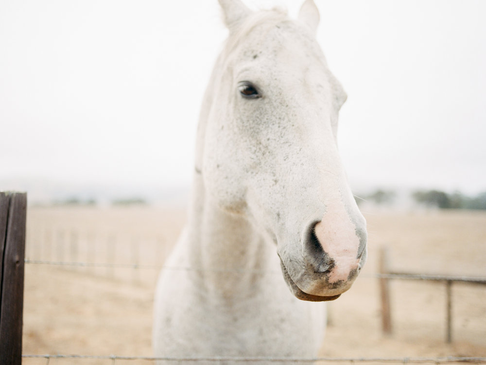 print_whitehorse.jpg