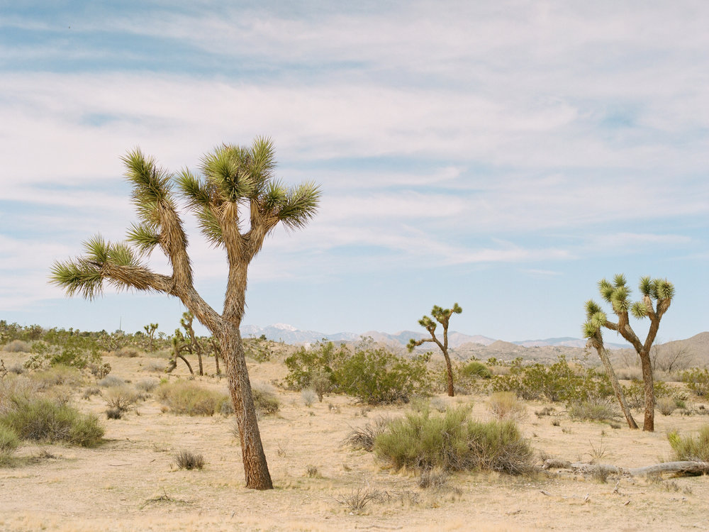 JoshuaTree_film148.JPG