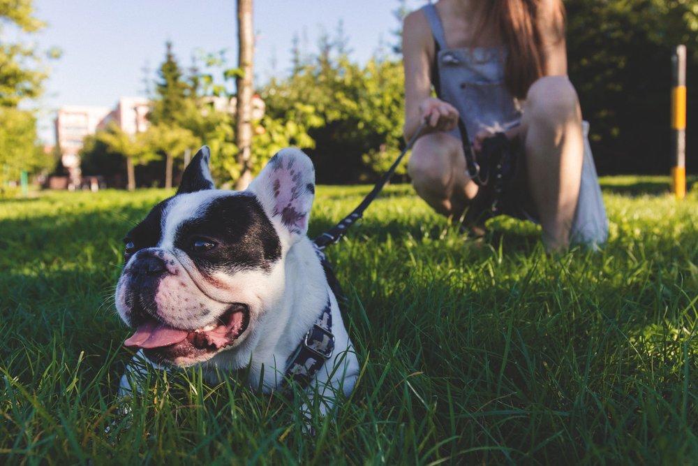 dog training norman oklahoma