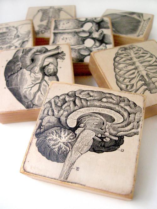 anatomyblocksBLOG