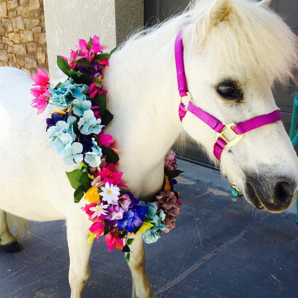 partyhorse.jpg