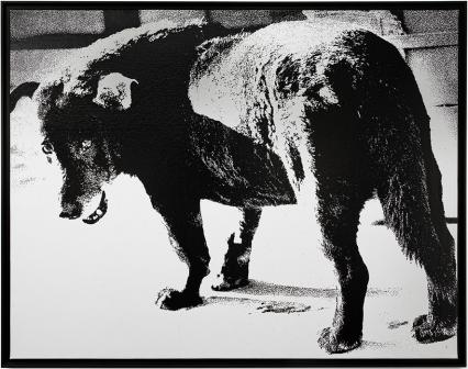 Daido Moriyama  Stray Dog  1971
