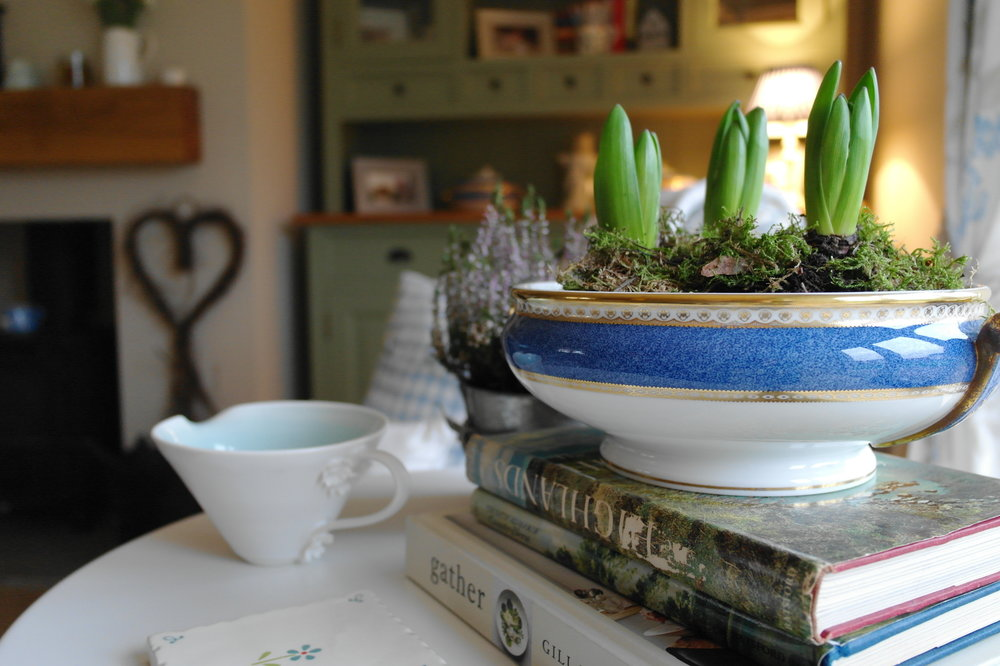 Planting spring hyacinths in china tureens.