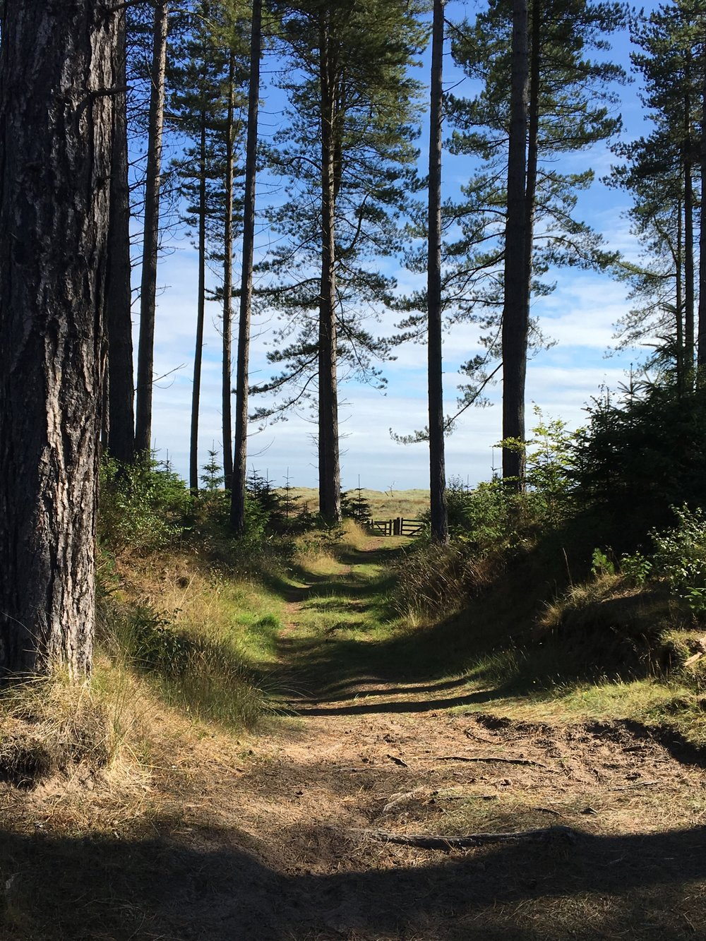 Forest meets the beach. I can lose myself for hours at Tentsmuir Forest.