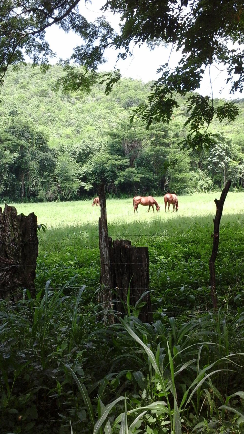 jamaica-horses.jpg