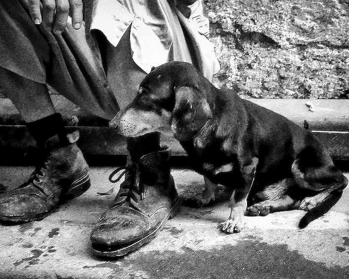Dogs of Havana#10.jpg