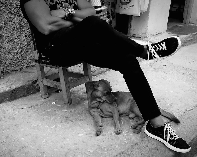 Dogs of Havana#11.jpg