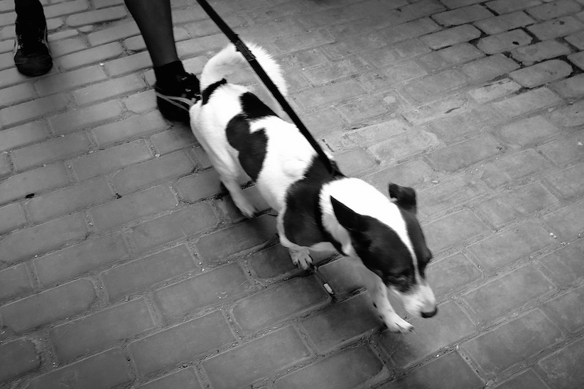 Dogs of Havana#12.jpg