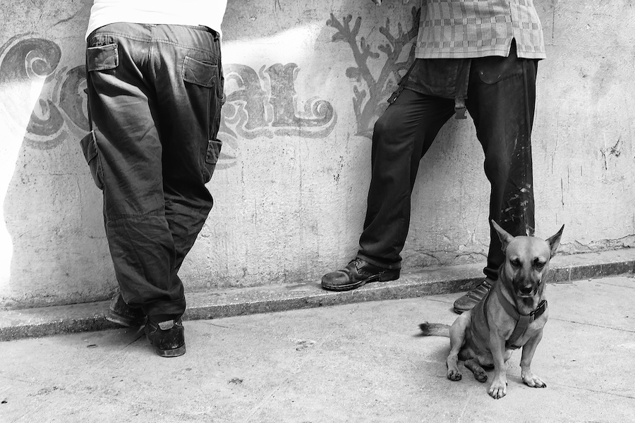 Dogs of Havana#13.jpg
