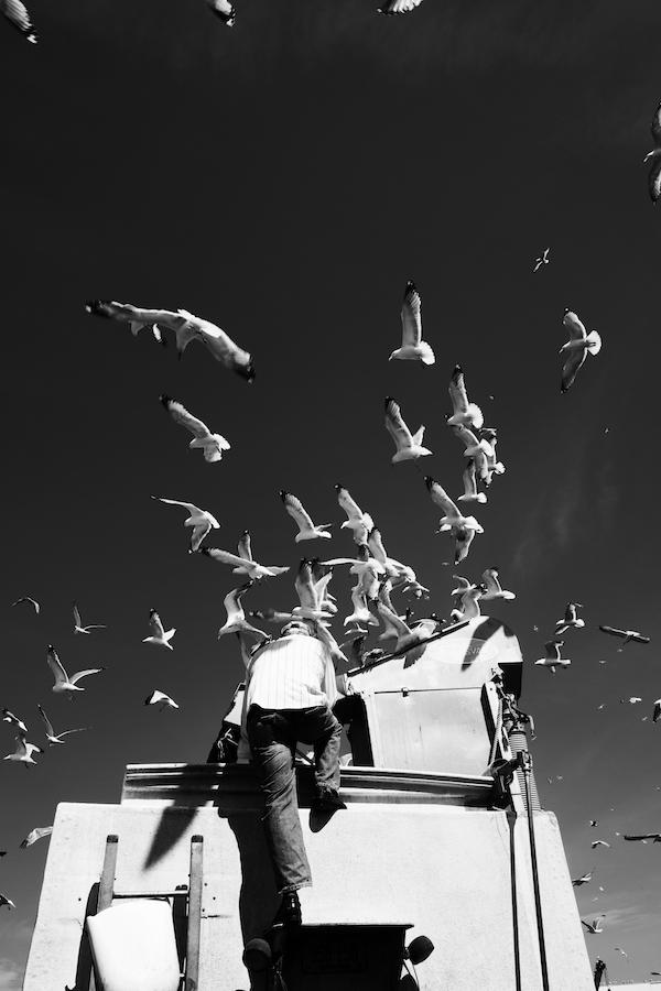 the gulls b&w.jpg
