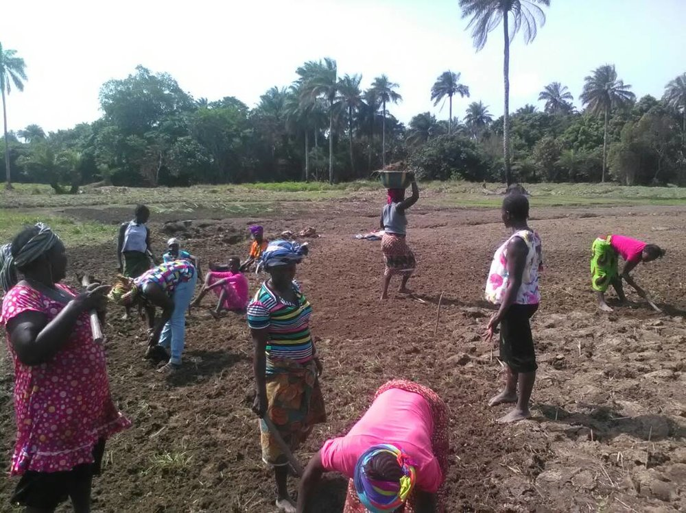 Farmers in Maforka village in Lunsar.