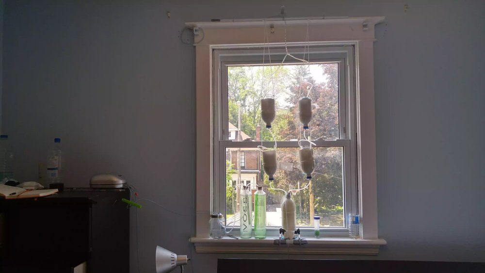 Spirulina reactor underneath the window with a DIY hydroponic garden above it.