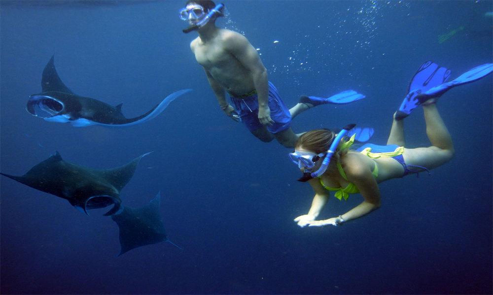 snorkeling-with-manta.jpg