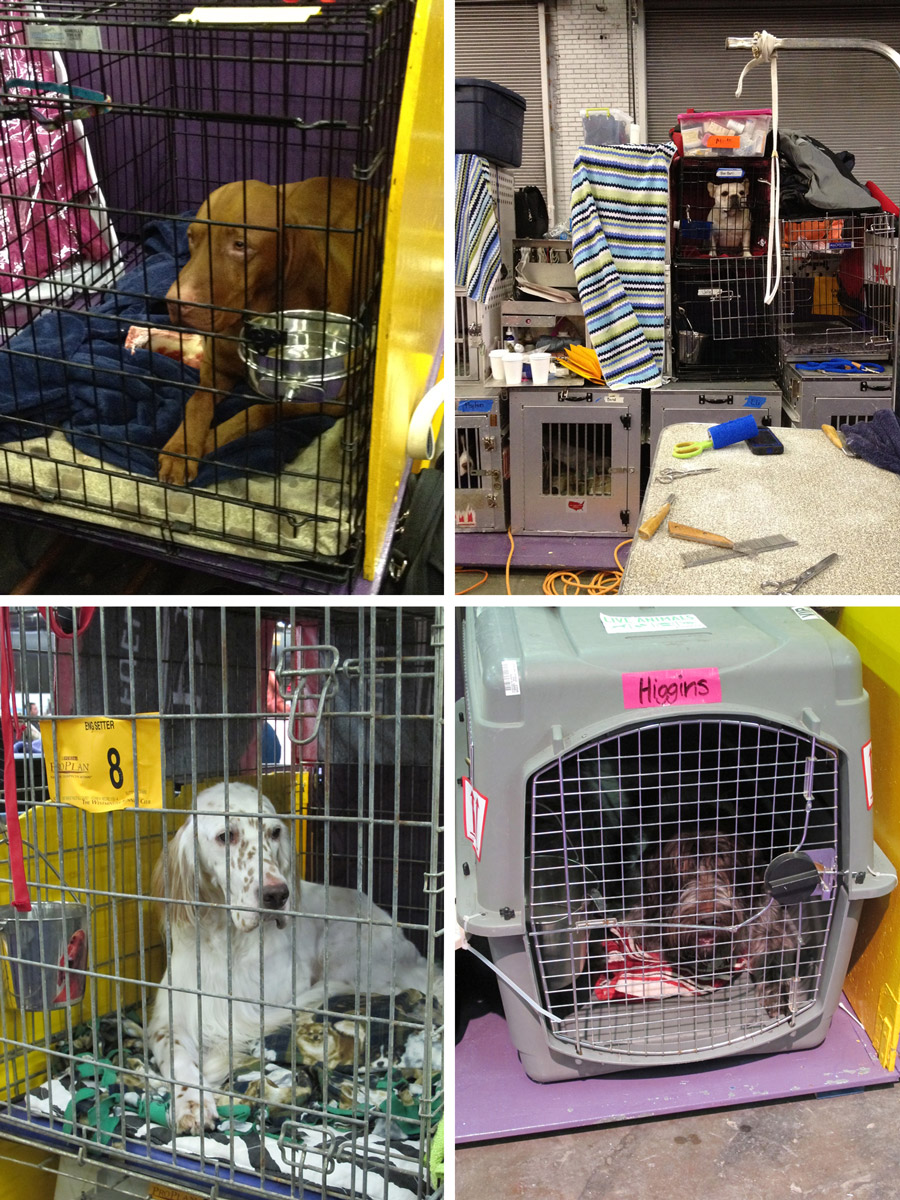 DOGSINCRATES_WEB
