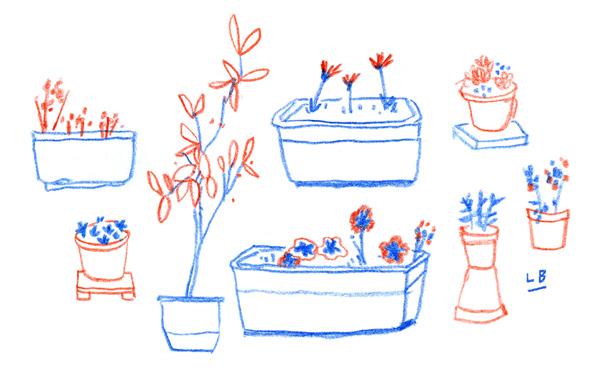 BALBIERZ_PLANTS_WEB.jpg