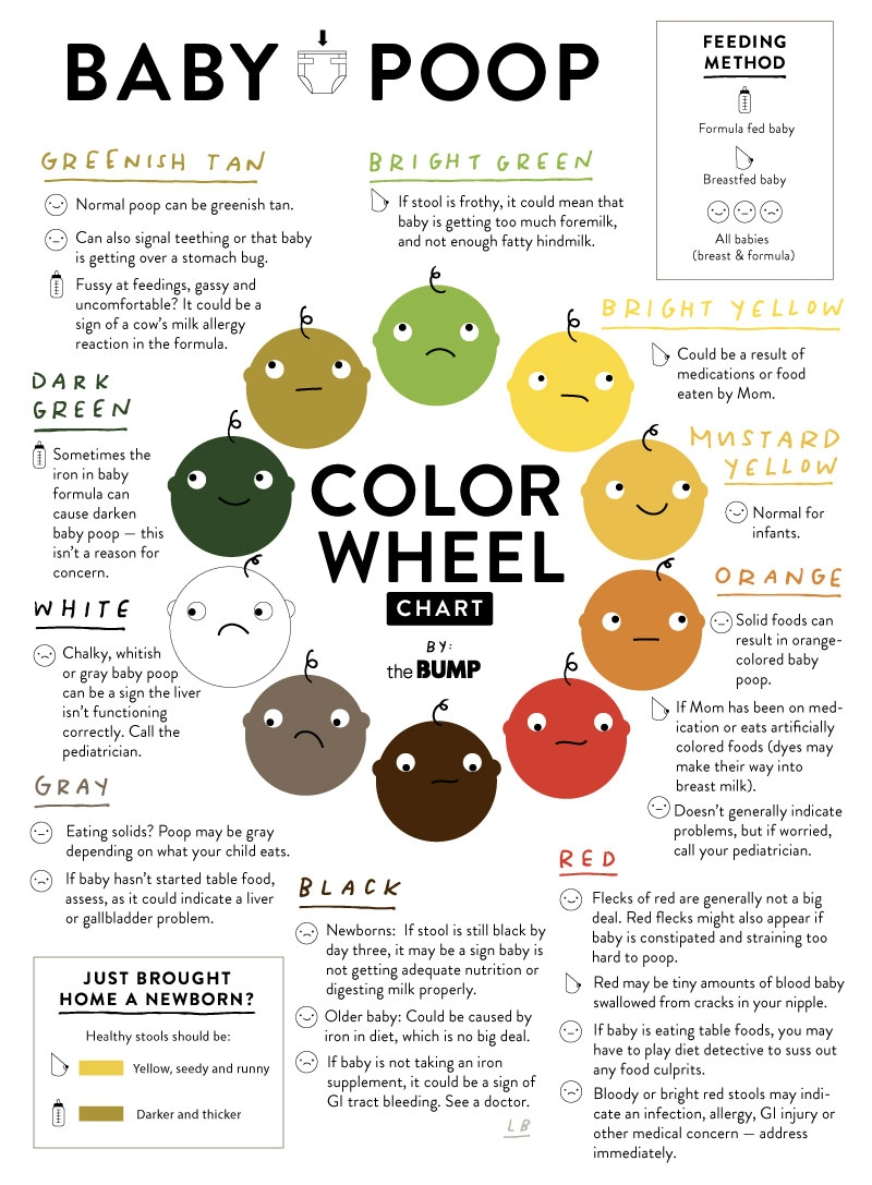 POOPCOLORWHEEL_FINAL_800X1100_RESIZE.jpg
