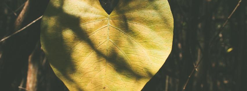 Lovelock Blog Post and Newsletter .jpg