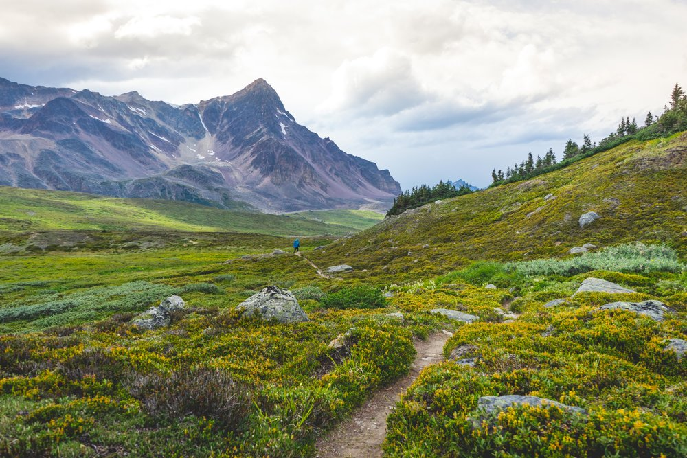 Sub-alpine meadows on the Brazeau Loop in Jasper National Park!