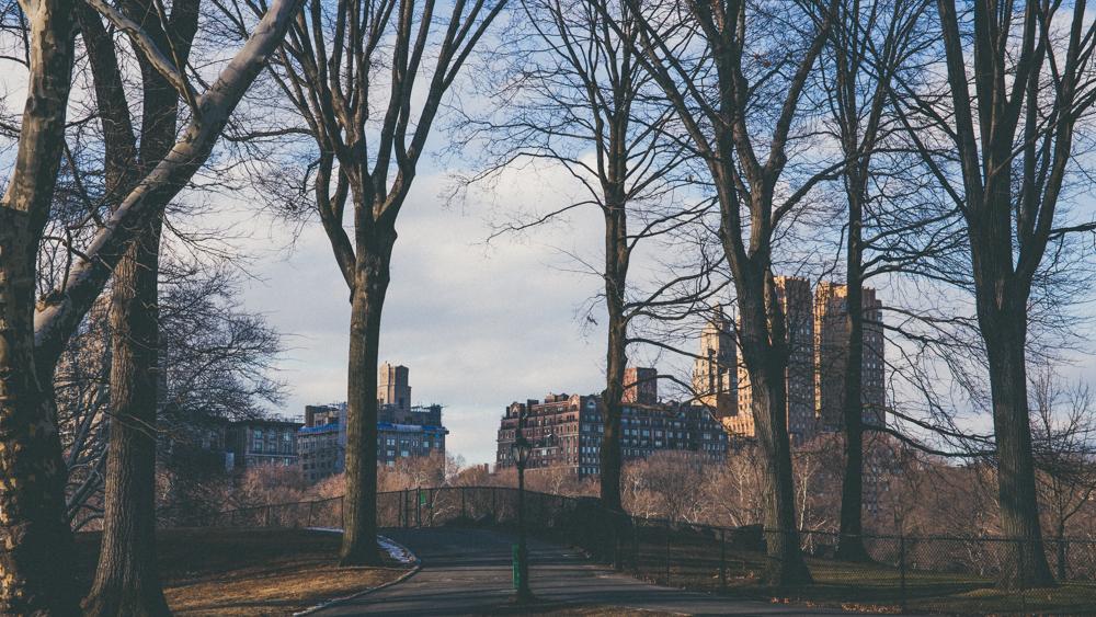 NY1-9.jpg