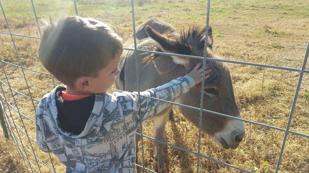 Jack at farm.jpg