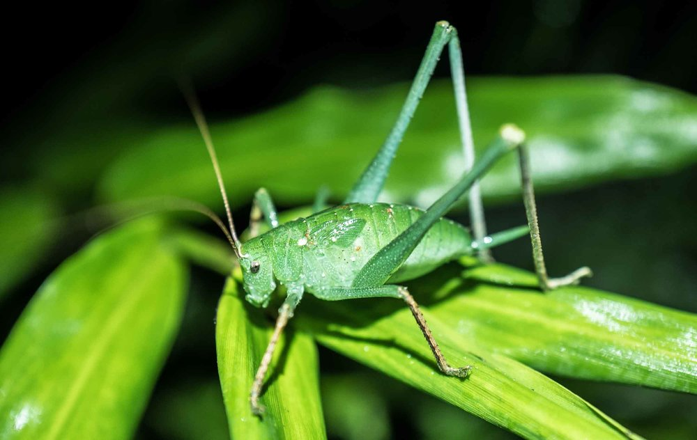 INSECTS & ARACHNIDS -