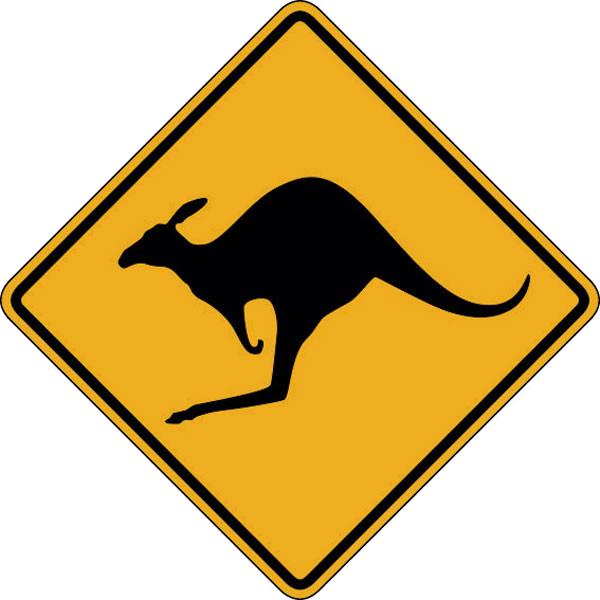 x-kangaroo copy.jpg