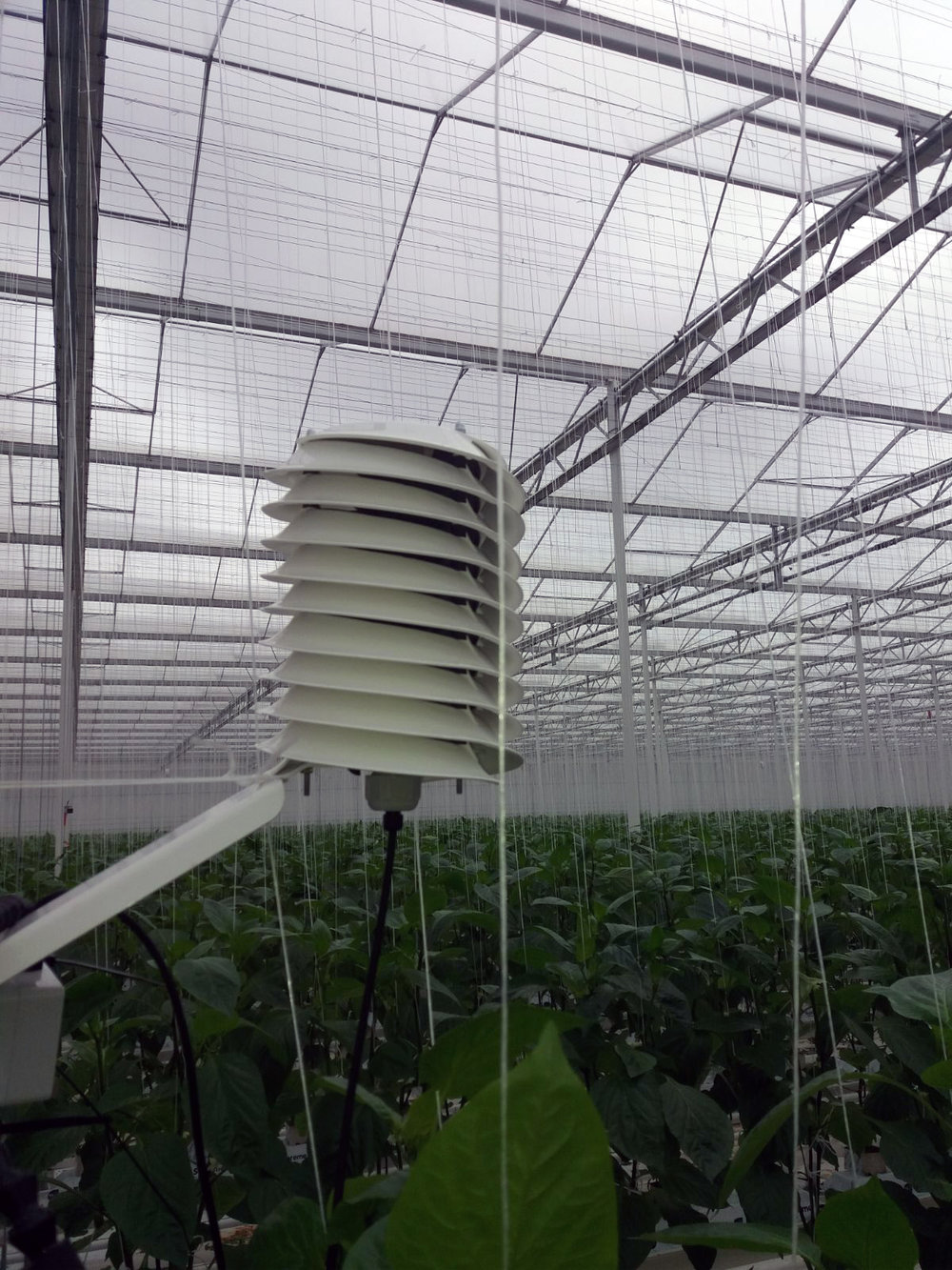 Helical solar radiation shield in greenhouse Barani Design